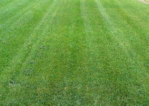 raleigh cary nc lawn grass types bermuda fescue zoysia grass species