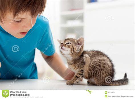 my has fleas my kitten has fleas stock photo image 26721310