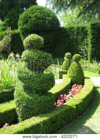 box hedge topiary topiary box hedge trees shape garden stock photo