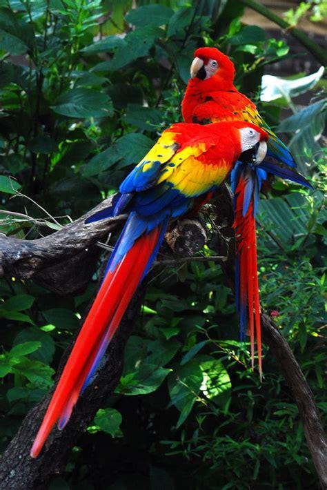 amazon rainforest images history biodiversity