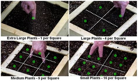 Garden Spacing by Square Foot Gardening In South Africa Square Foot Garden