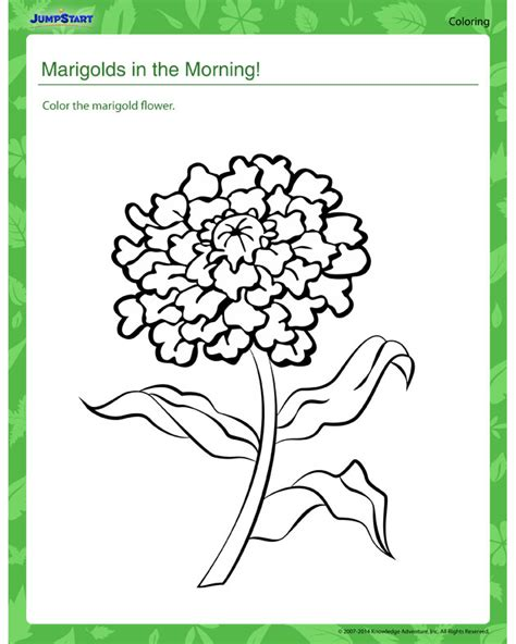 marigolds in the morning worksheet free plants coloring