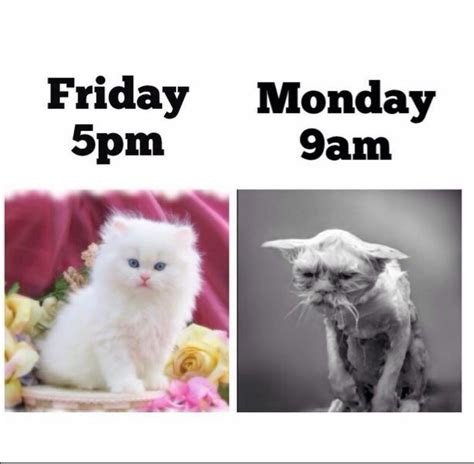 Friday Monday Meme - 661 best images about fridays and mondays ツ on pinterest