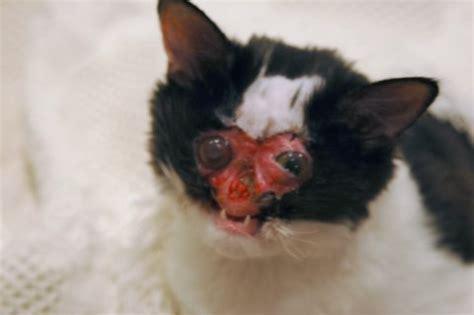 cat chases this cat has no album on imgur