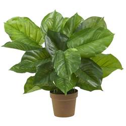 27 inch large leaf philodendron potted 6582 nearly natural