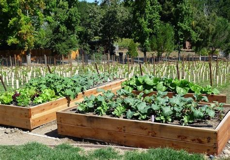 Winter Vegetable Garden California Foods For Start Your Fall And Winter Vegetable