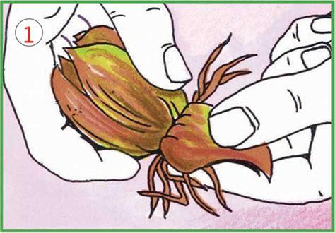 il giglio fiore giglio fiore come coltivarli e moltiplicarli con le