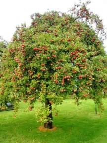 apple tree attracts downy woodpeckers and deer may need