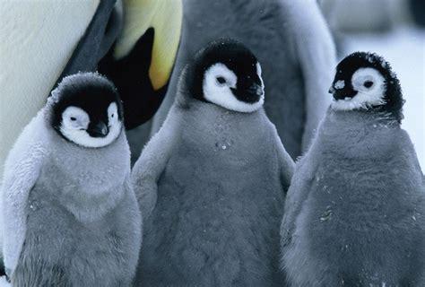 imagenes de animales que migran por qu 233 migran los animales