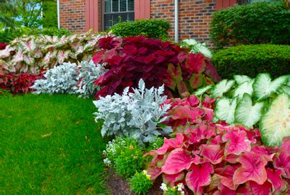colorful shade plants colorful shade plants for landscaping outdoors