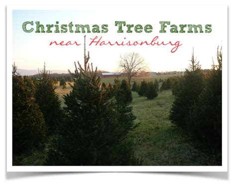 christmas tree farms near harrisonburg 187 harrisonblog