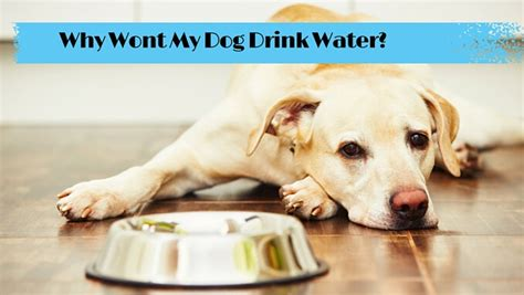 puppy wont drink water why isn t my water smart owners