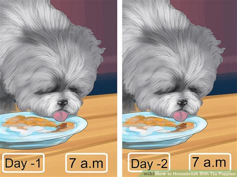 how to potty a shih tzu puppy 3 ways to housebreak shih tzu puppies wikihow