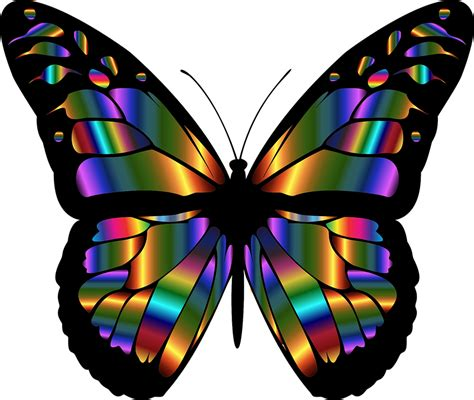 colorful butterfly abstract animal 183 free vector graphic on pixabay