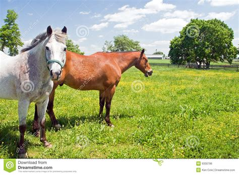 bright pasture susan cole photography two horses in pasture royalty free stock image image