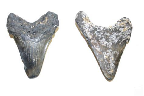 Fossil Es 3755 dan mobile