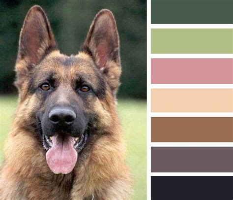 german shepherd colors german shepherd pin color breeds picture