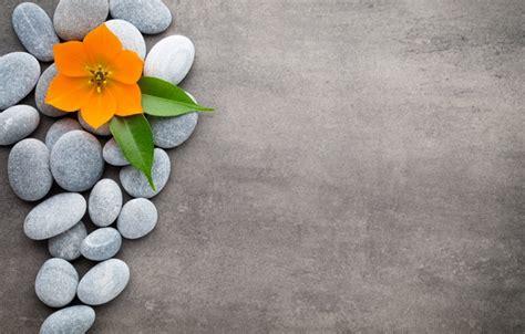 flower zen wallpaper wallpaper flowers stones flower orchid spa stones