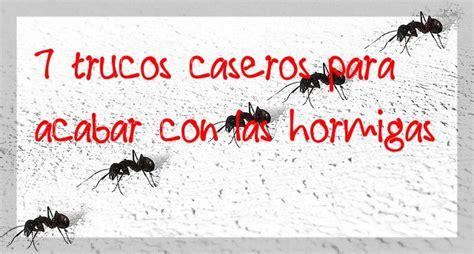 acabar con hormigas en casa 7 trucos caseros para acabar con las hormigas