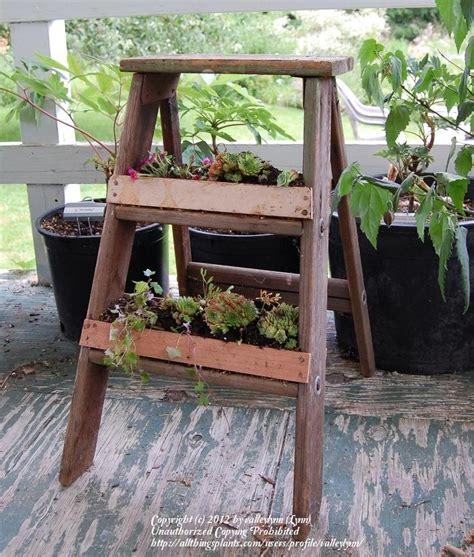 Step Planter by Step Ladder Planter Garden Org