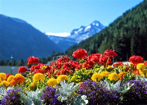 primavera fiori teendencias chile primavera pastel femenino y grunge