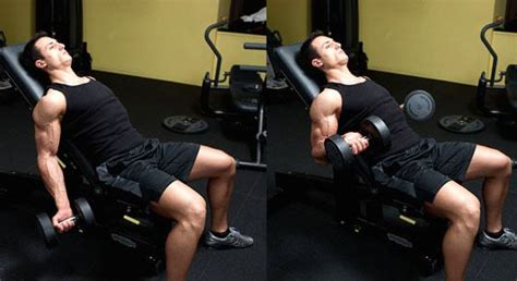 Curl Incline by Musculation Des Biceps Le Curl Inclin 233