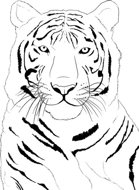 face tiger coloring page new coloring pages coloring home
