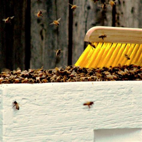 raising bees in backyard 154 best beekeeping info images on pinterest