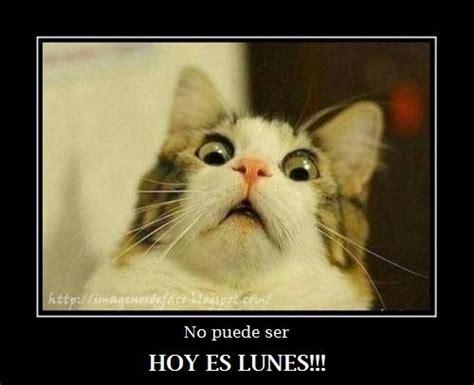 imagenes chistosas hoy es lunes 17 mejores ideas sobre imagenes de gatos graciosos en