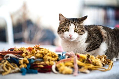 gatti tappezzeria marco il tappezziere lavora con i gatti a mici di