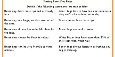 boxer facts sorting boxer facts classroom secrets