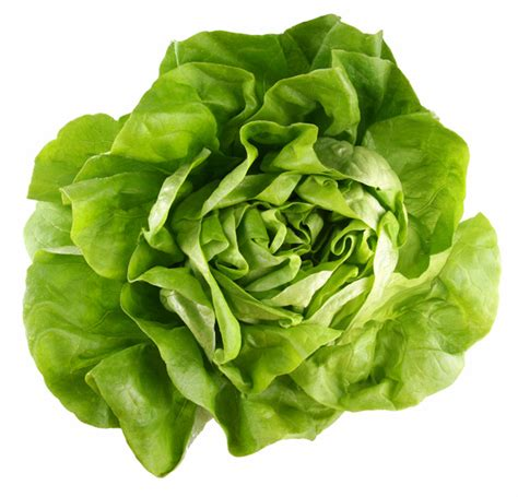 how to grow lettuce amp leafy green veggies this fall