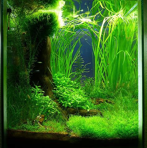 Freshwater Aquascaping Ideas by Best 25 Nano Aquarium Ideas On Freshwater