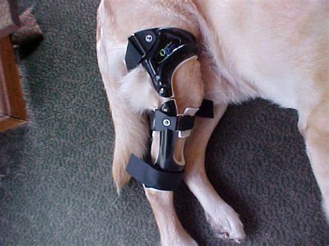 ccl brace best 25 torn acl in dogs ideas on cruciate ligament pet meds and