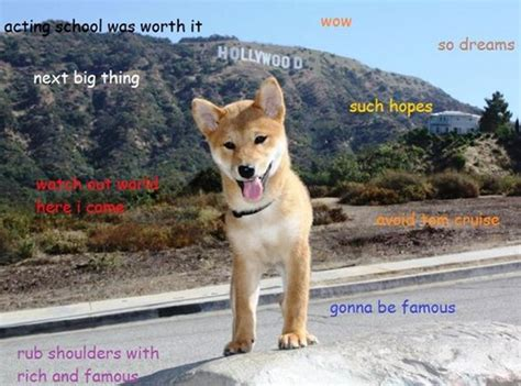 Best Doge Meme - the price of dogecoin is down but that won t stop us from