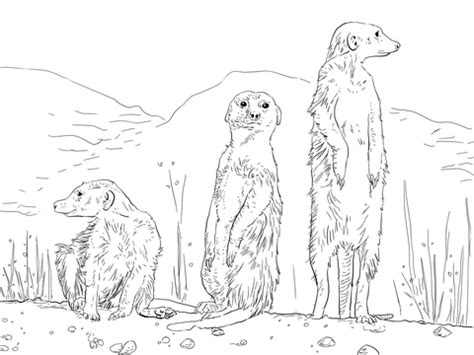 Three Meerkats Coloring Page Supercoloring Com Meerkat Colouring Pages