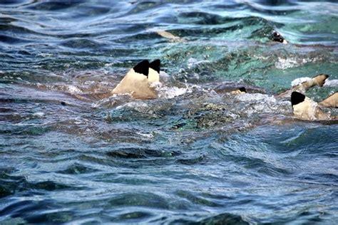 garten französisch ein traum in der s 252 dsee die inseln in franz 246 sisch polynesien