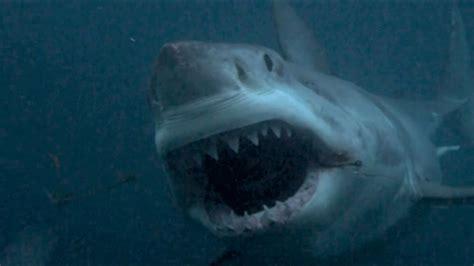megalodon shark size submarine shark megalodon shark week submarine shark jpg