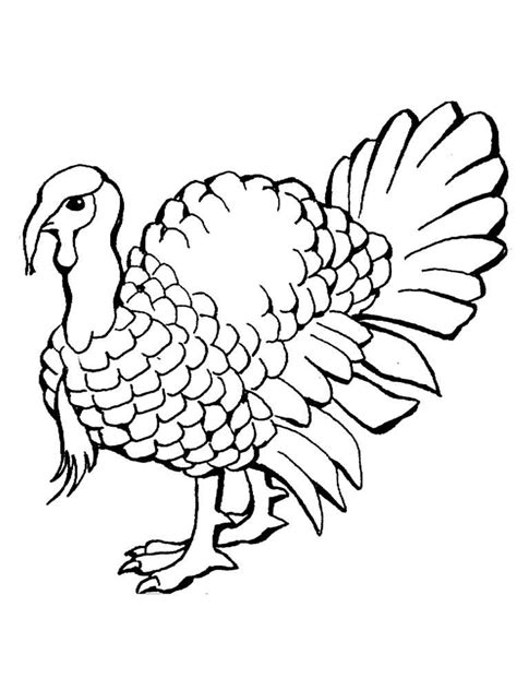 pictures of turkeys to color turkeys coloring pages and print turkeys