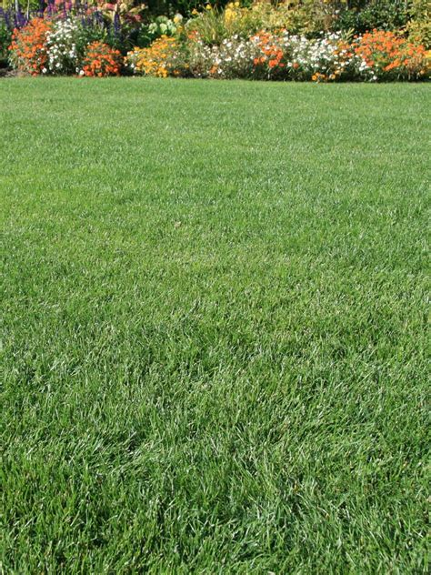 Grass Seed by Classic Lawn Seed Is The Best Grass Mixture For A Quality Lawn