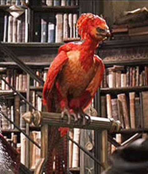 the real fawkes books in my soul the from the