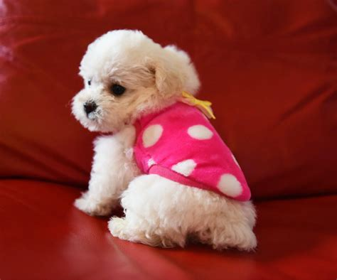 teacup puppy clothes get cheap teacup clothing aliexpress alibaba