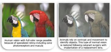 can cats see in color vision compared to human vision