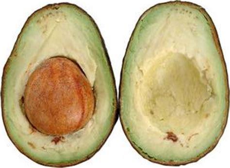 alimenti ricchi di azoto come a dire quando il tuo albero di avocado dar 224 i suoi