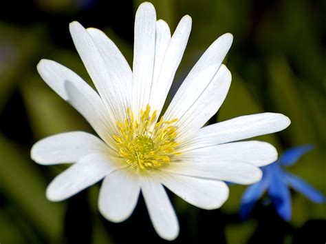 White Flower Images | white flower