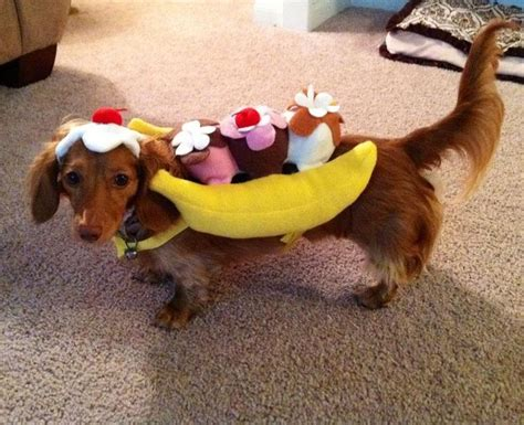 weiner costumes 17 mejores ideas sobre dachshund costume en dachshund weiner y perros