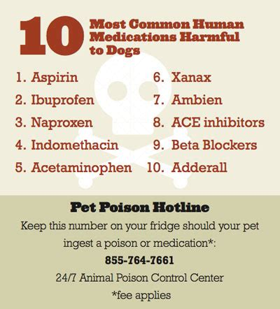 the counter meds for dogs the 10 human medications most dangerous to dogs american kennel club