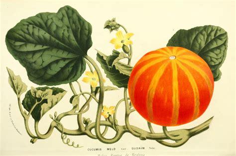 vintage pumpkin remodelaholic 25 free vintage nature images for fall