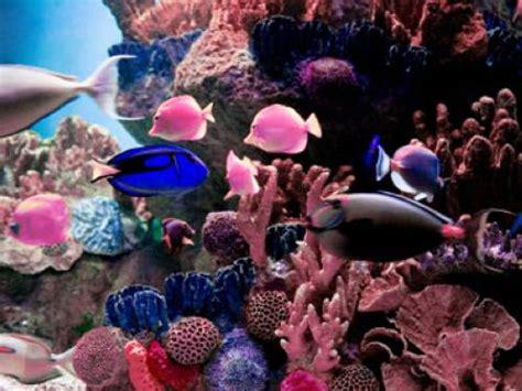 warum haben fische schuppen warum haben fische sechs sinne