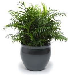 Pots For Plants 2014 Modern Indoor Pots For Plants Collection Trendy